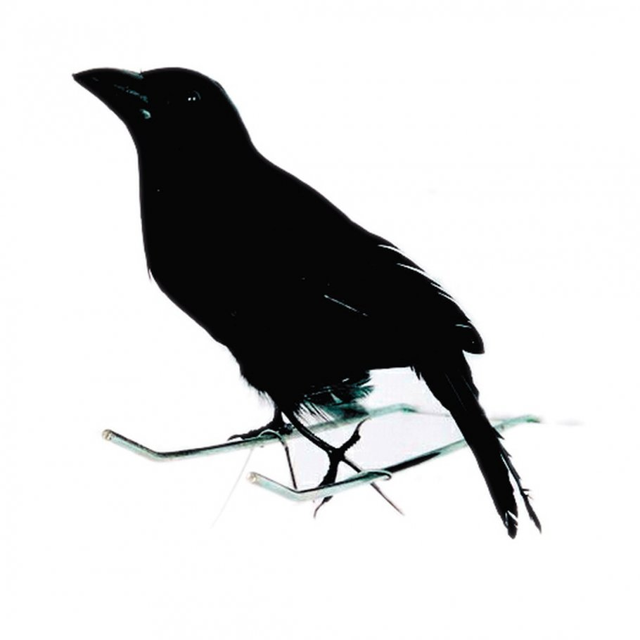 deko kr he schwarzer rabe mit federn d sterer vogel partydeko spuk rabenvogel raumdeko. Black Bedroom Furniture Sets. Home Design Ideas